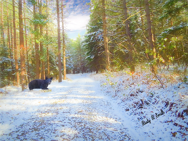 Composite art photograph,black bear in snowy forest scene. by Rusty R Smith